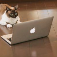 大量発生中「インターネット使用料無料の賃貸物件」ってどうなの?[メリット・デメリットを徹底調査]