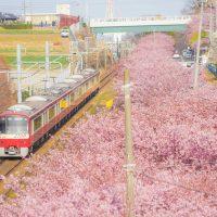 神奈川県三浦市ってどんな街?家賃相場はいくらぐらい?